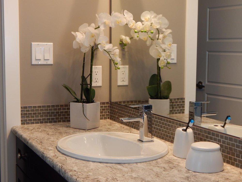 odpowiednio dobrane kwiaty do łazienki
