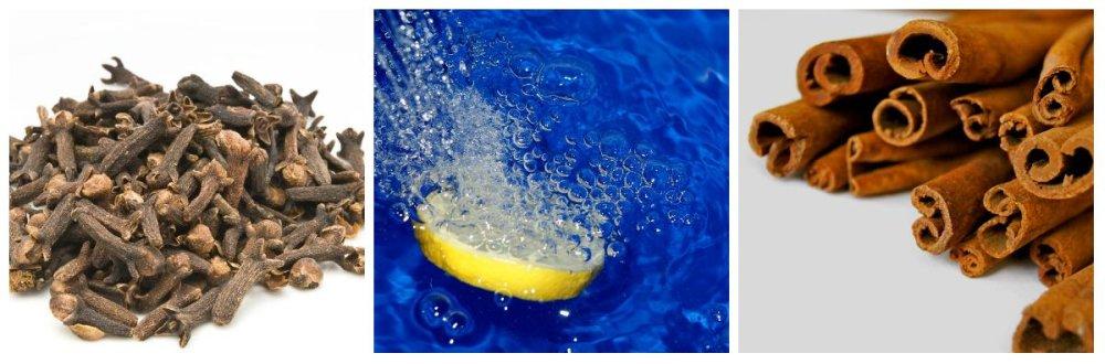 Jak Pozbyć Się Rybików Z łazienki Poradnik Porady